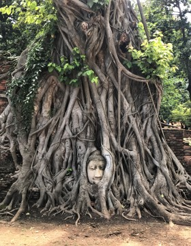 A Buddha head entangled in tree roots at Wat Mahathat